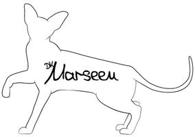 DK*MARSEEN - Peterbald & Oriental Shorthair